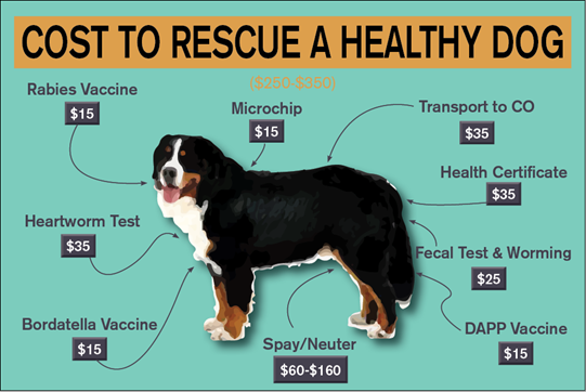 cost to rescue dog