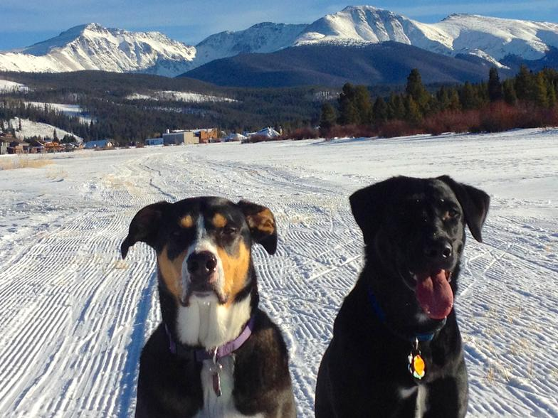two dogs on the snow